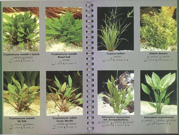 Виды аквариумных растений с фото и названиями