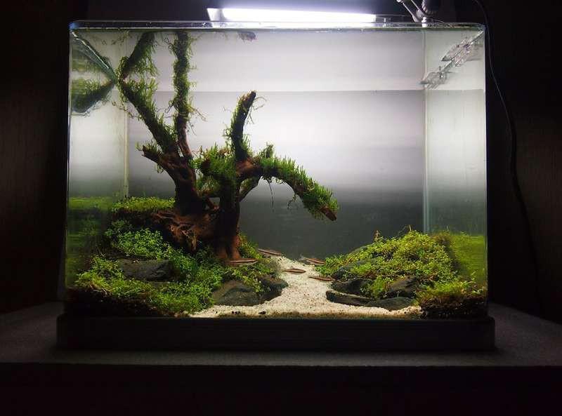 снуд, дизайн аквариума с камнями фото что