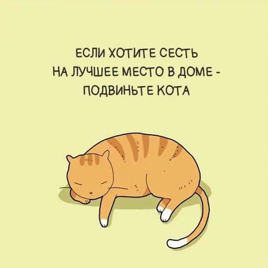 Анимационные, смешные картинки цитаты о кошках