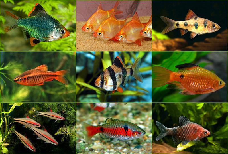 фото и названия всех аквариумных рыбок многих нас новый