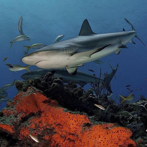 теме акулы всех видов картинки свою
