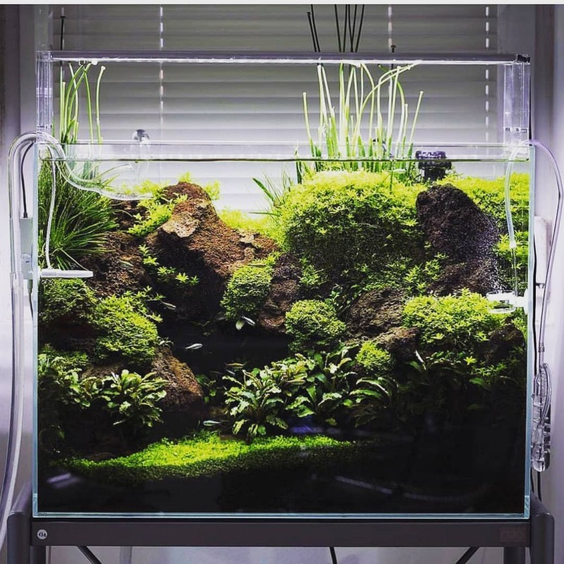растения для нано аквариумов фото устали бегать клумбам